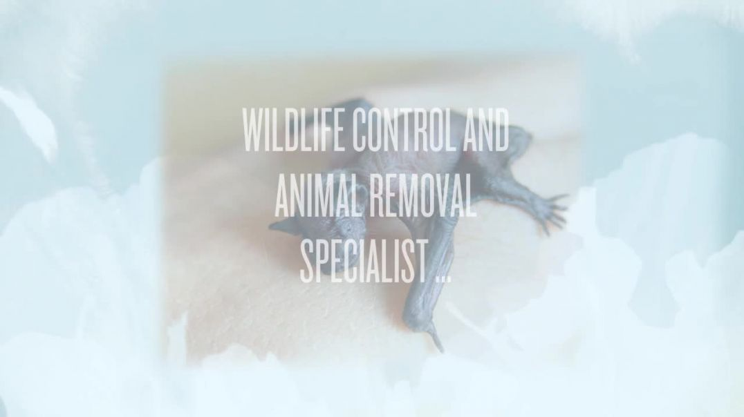 Wild Animal Removal Services San Francisco