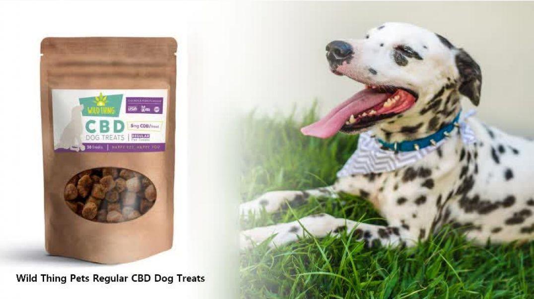 Shop CBD Oils for Dogs