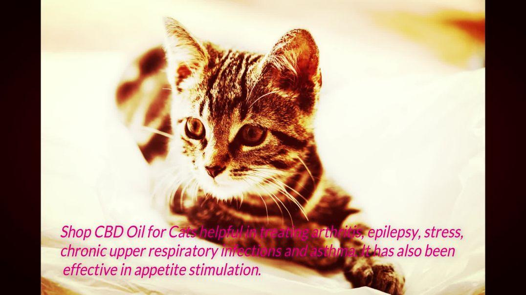 Benefits of CBD Hemp Oil for Cat1.mp4